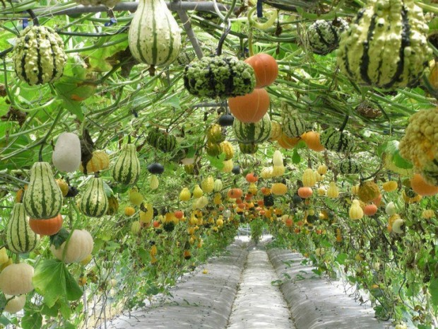 Vegetables You Can Grow in a Small Backyard | Garden Pine ...