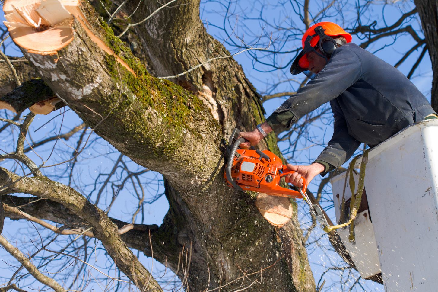 Common Tree Pruning Practices You Should Avoid