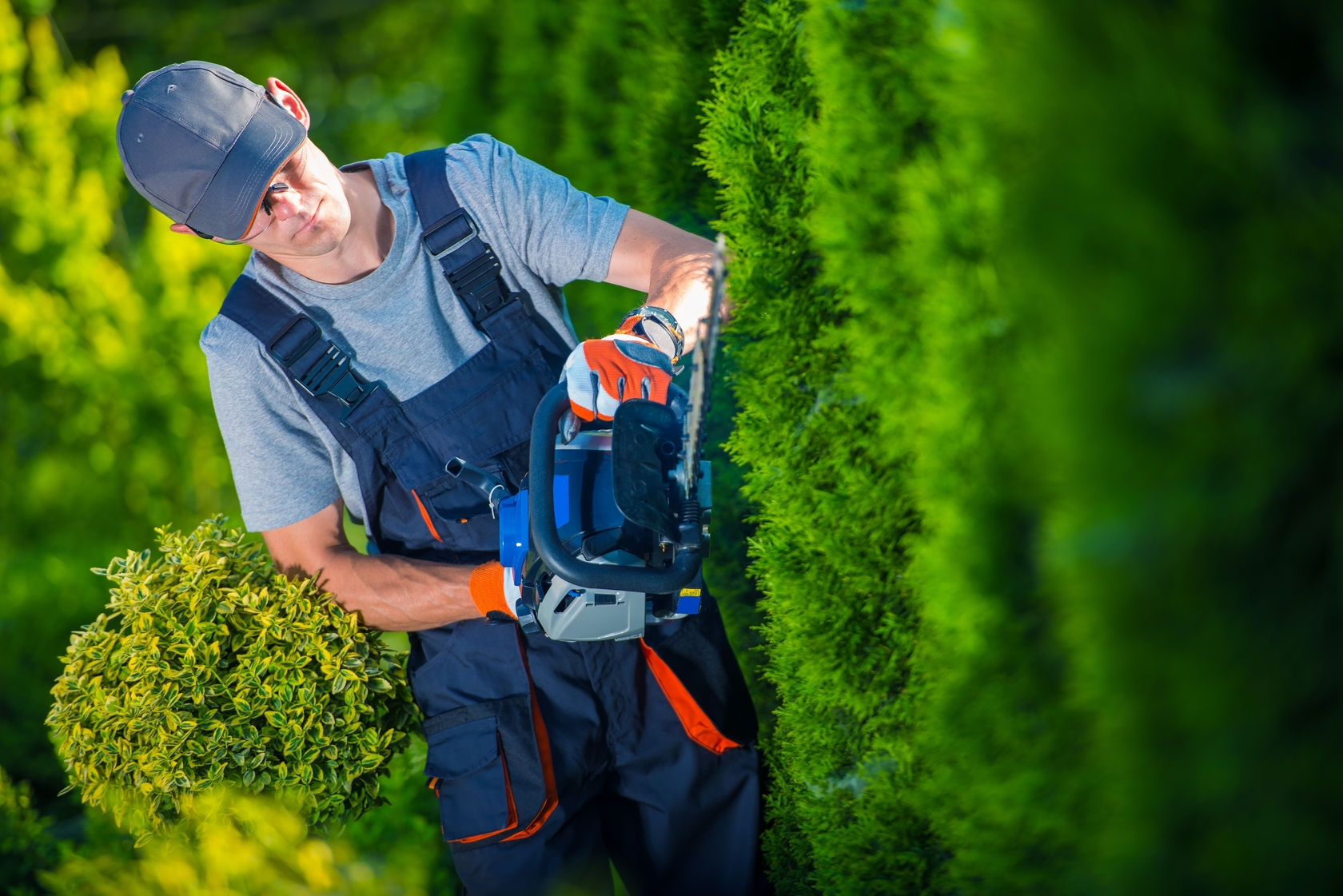 Why You Should Let Professionals Touch Your Yard