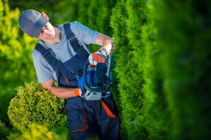 Landscaping Professional in Australia