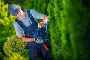Landscaping Professional in Australia