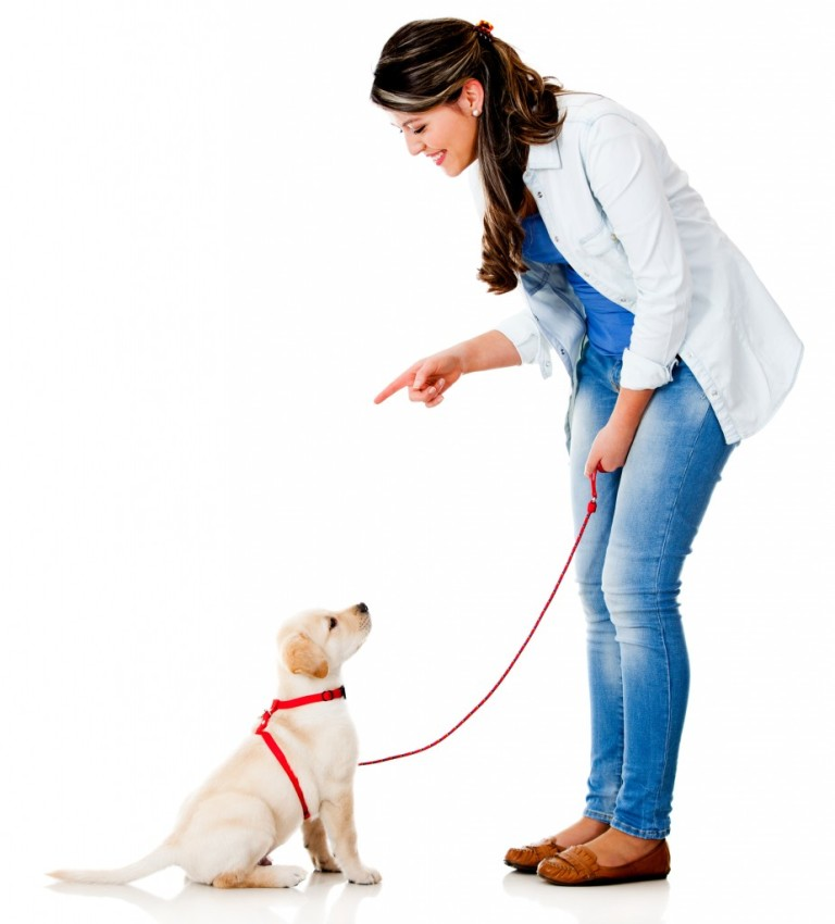 Dog Training in Melbourne