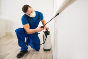 Preventing Pest Infestation