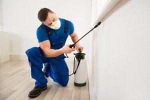 Preventing Pest Infestation