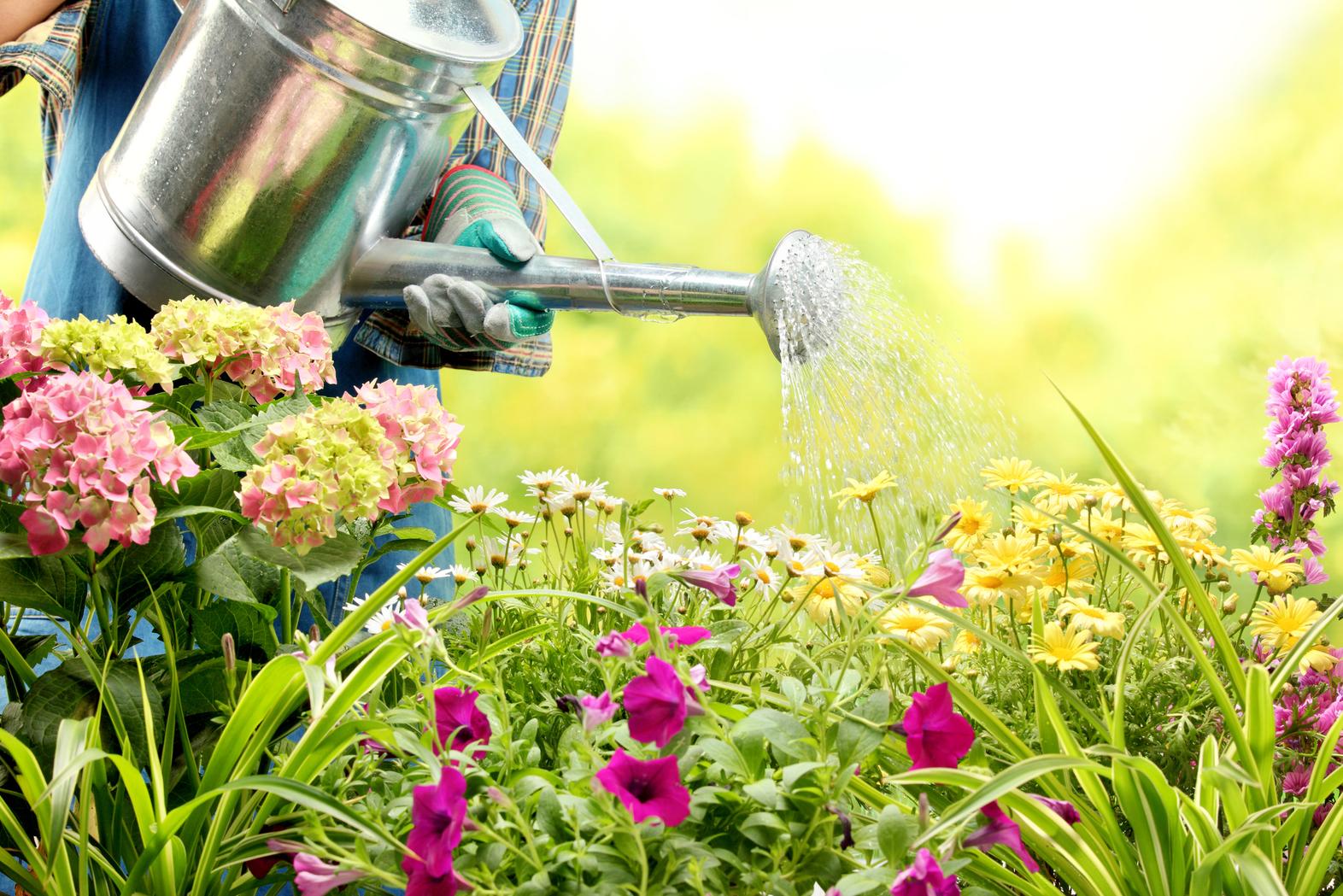Five Quick Tips on Enhancing Your Garden