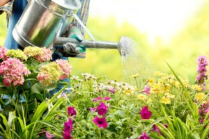 Person Watering Flowers in the Garden