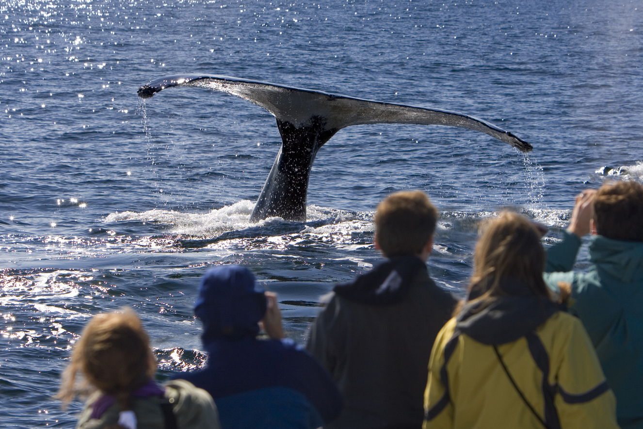 A Guide on Responsible Whale Watching in Australia
