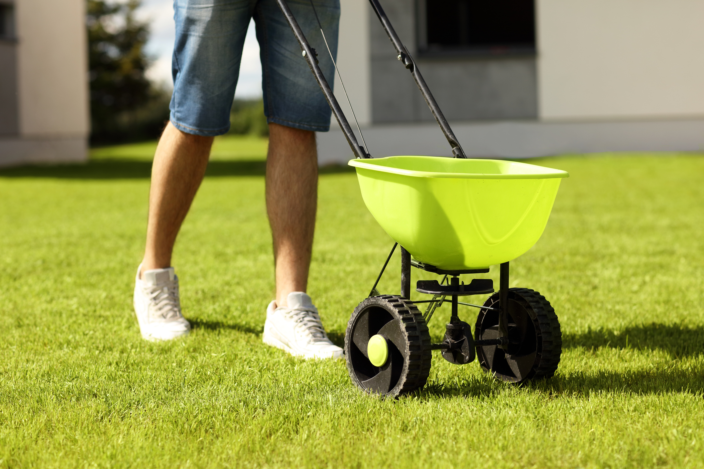 Knowing When You Should Fertilize Your Lawn