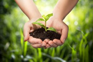 Taking care of the soil and plant