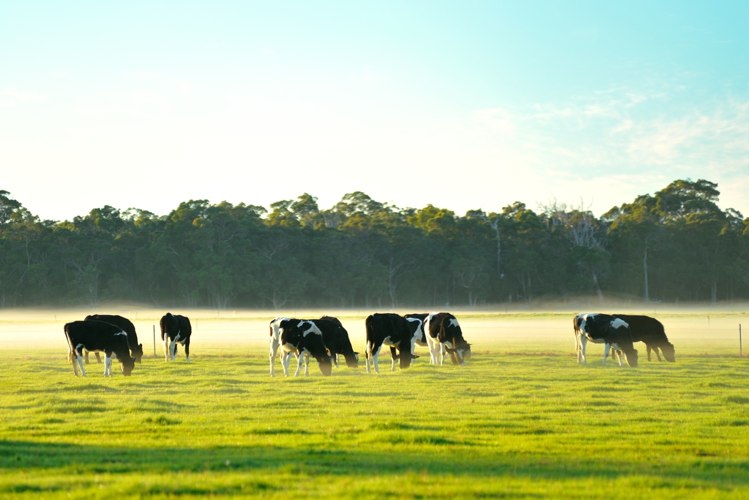 The Growth Opportunities in Australian Agriculture