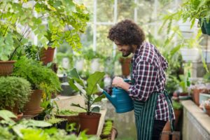 man watering plants in a greenhouse