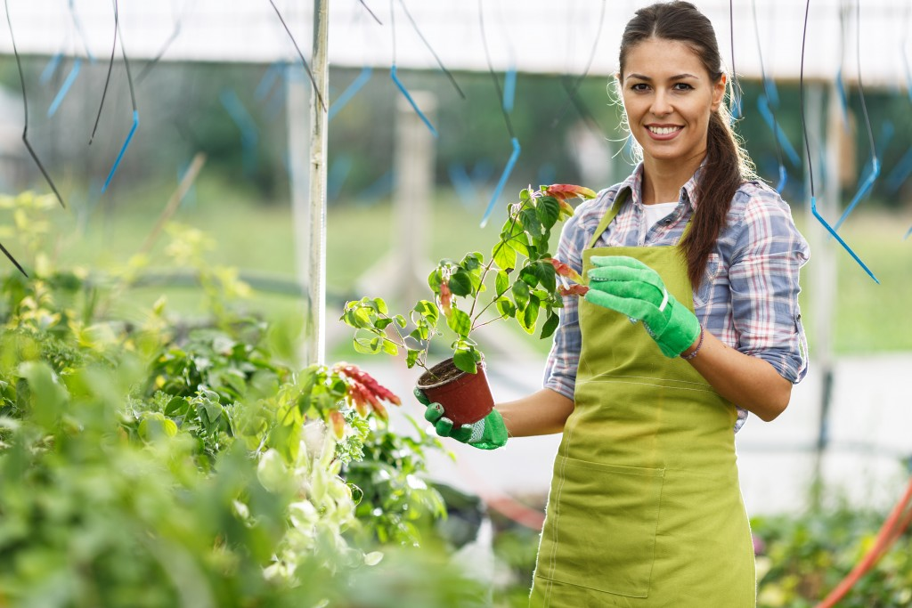 How to Keep Your Greenhouse in Great Condition
