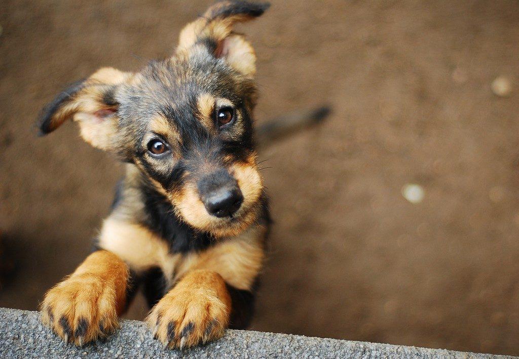 Cute puppy in the backyard