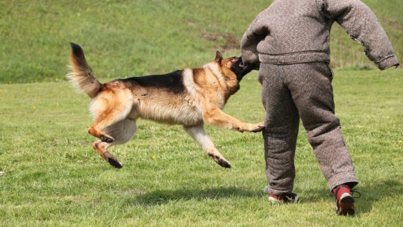 Behavior Modification Techniques Used for Dogs