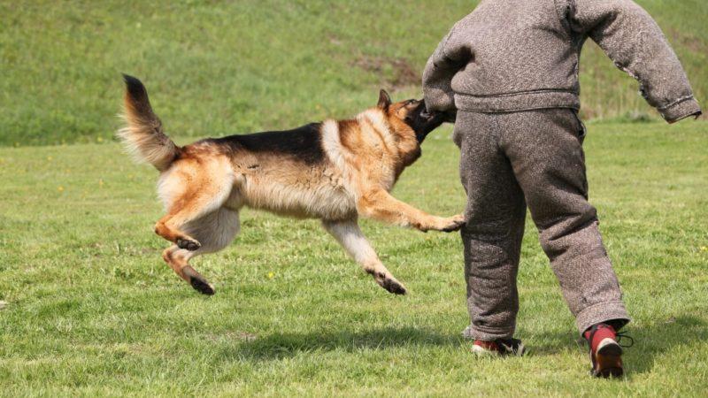 Behavior Modification Techniques Used for Dogs