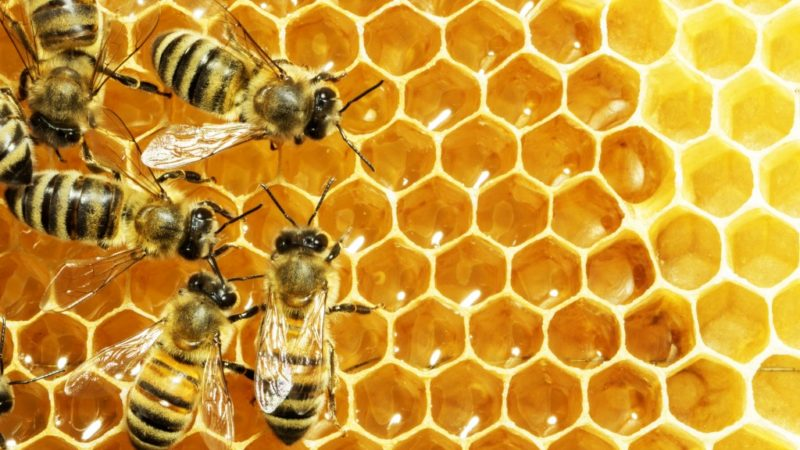How Modern Design Uses the Honeycomb