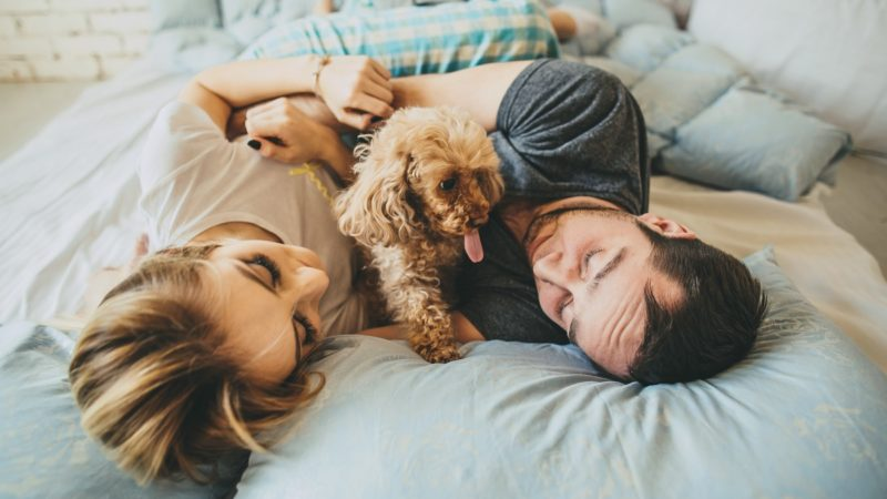 How Caring for Dogs Prepares Couples for Parenthood