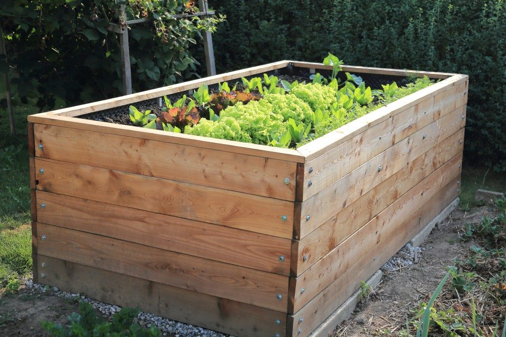 plant bed