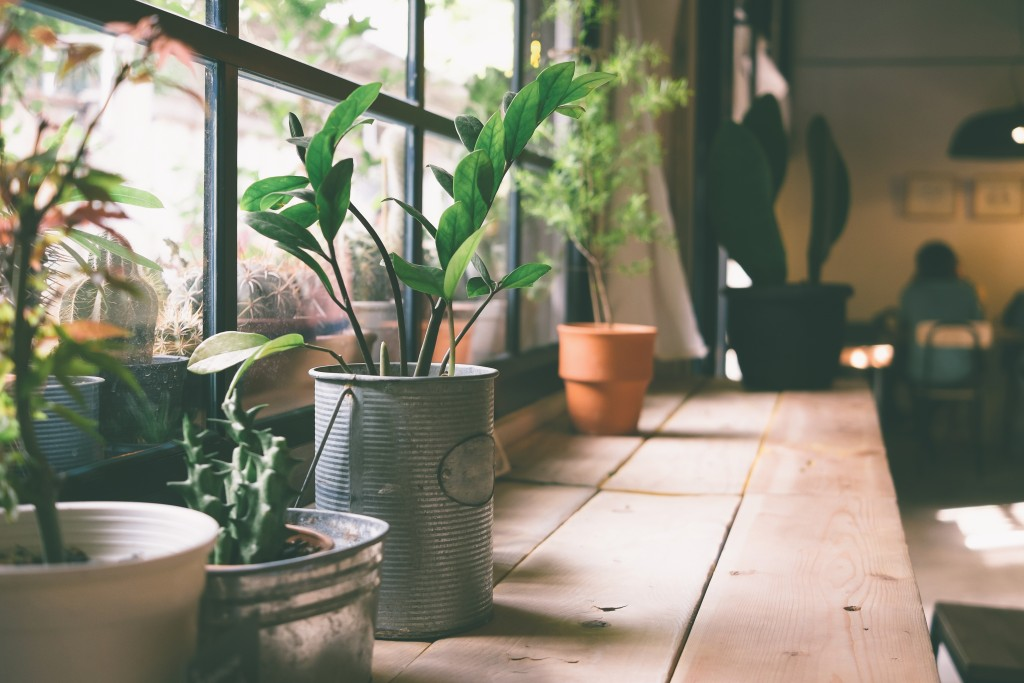 A Guide to Indoor Container Gardening