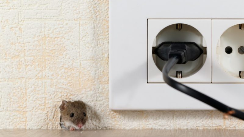 How Will You Know If You Still Have Rodents Inside Your Home?