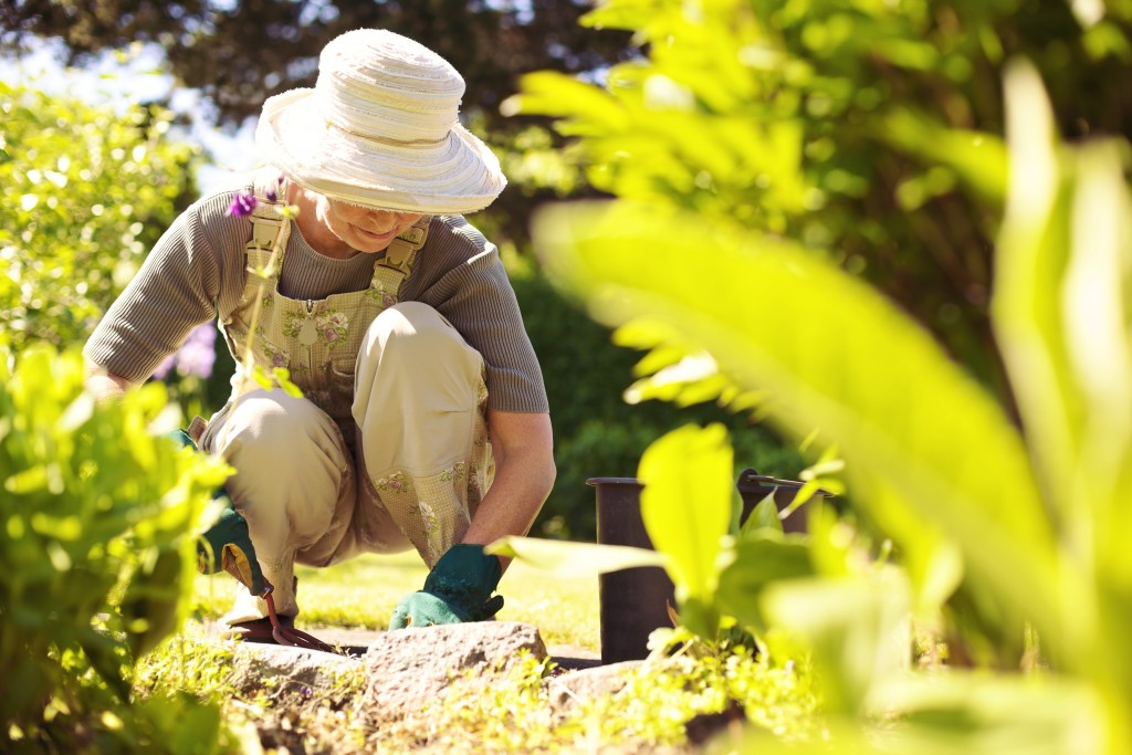 Back Pain Prevention Pointers for Gardeners