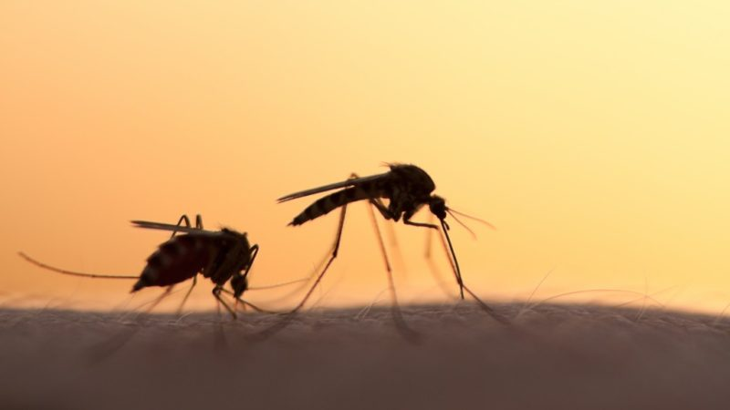Dengue Fever: How Serious Is It?