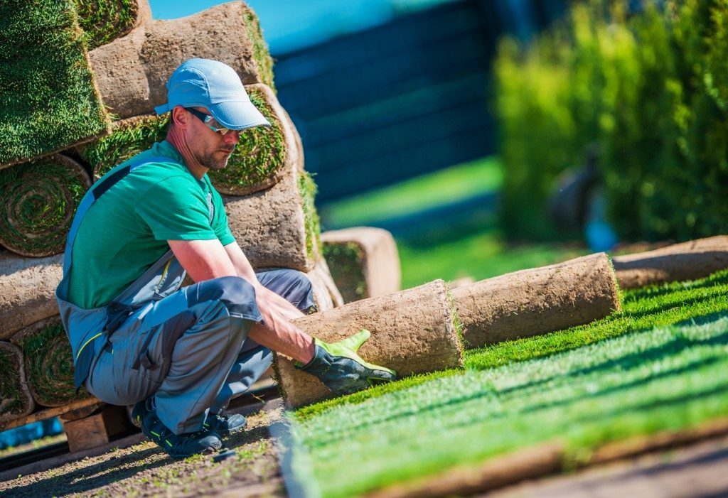Professional gardener applying turf roll