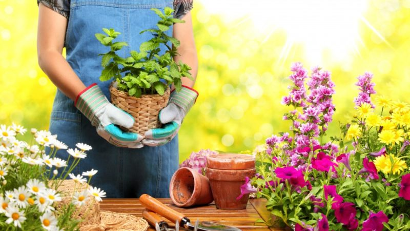 Planning Your Garden Using These Apps