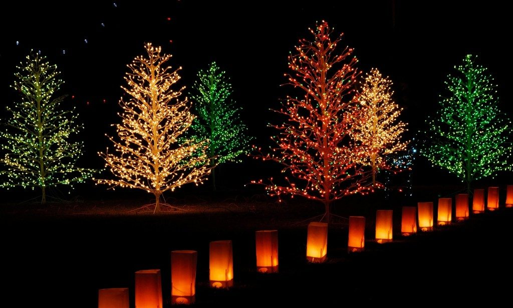 christmas lights on bare trees