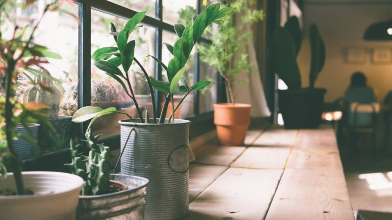 4 Steps to Invite Nature into Your Home