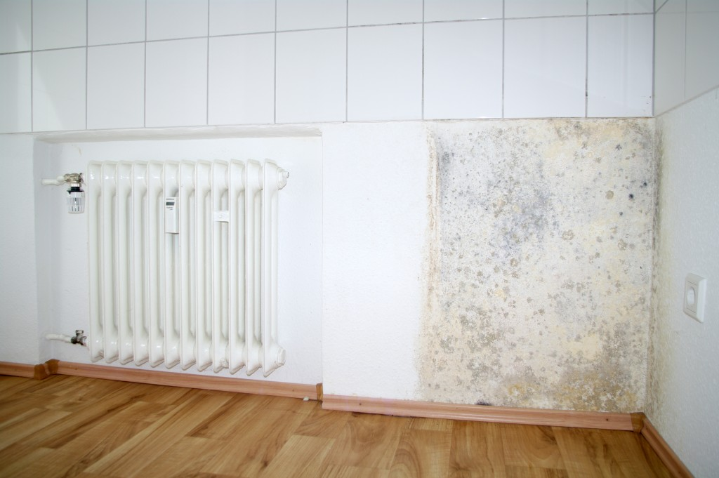 5 Signs That Your House Has a Mold Problem