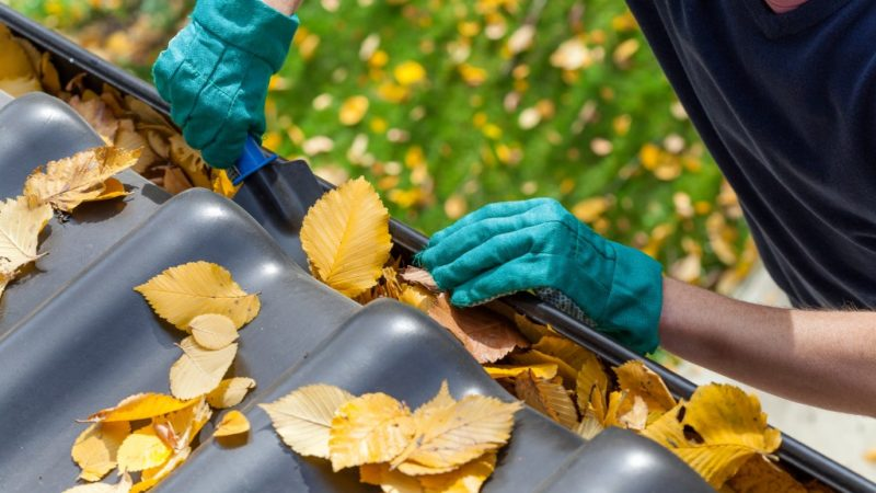 Proper Gutter Maintenance Steps Every Homeowner Should Know