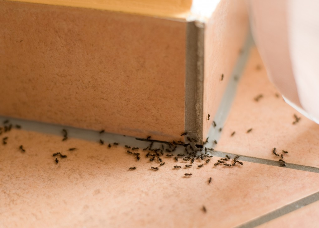 Hospitality Industry: Fumigate or Suffer the Wrath of Pests