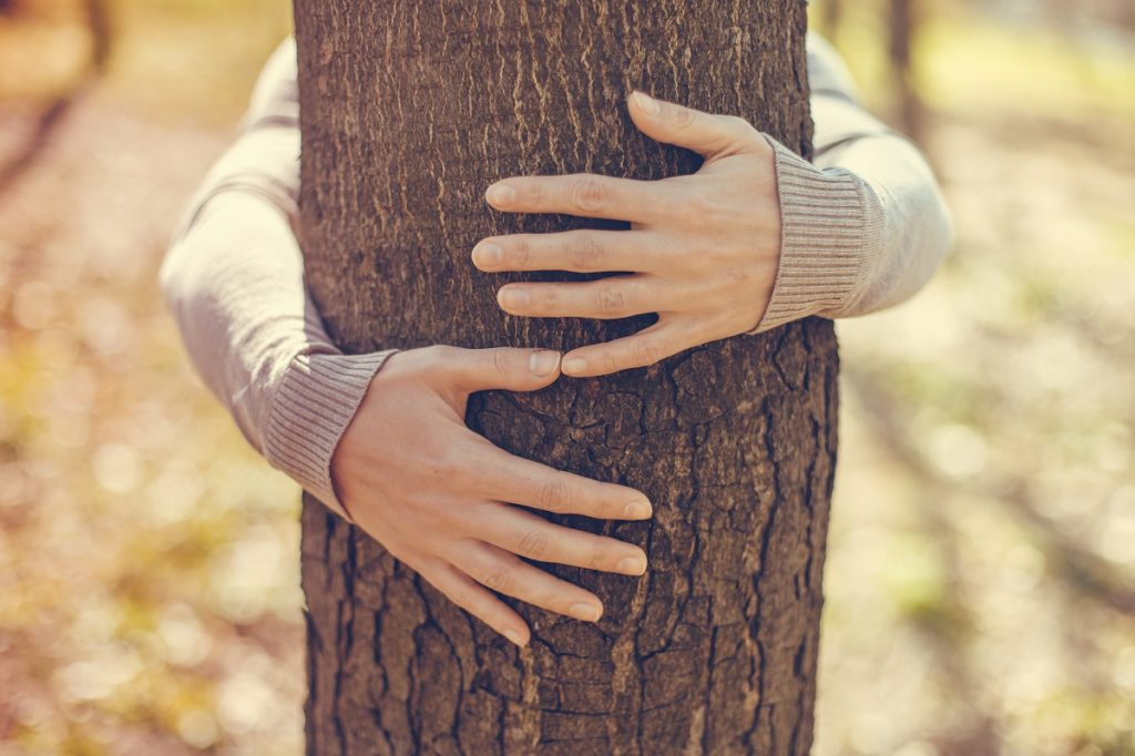 hugging tree