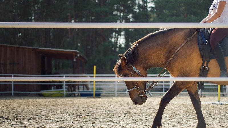 What You Must Know Before You Go Horseback Riding