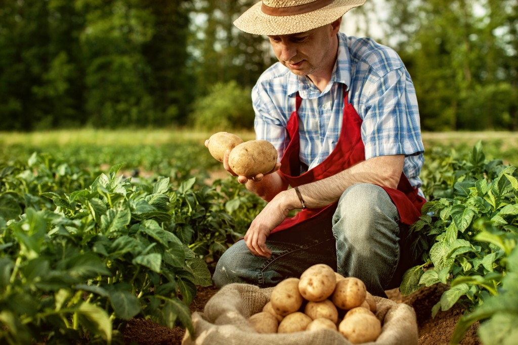Agricultural Renaissance: Why Community-Supported Farming Matters
