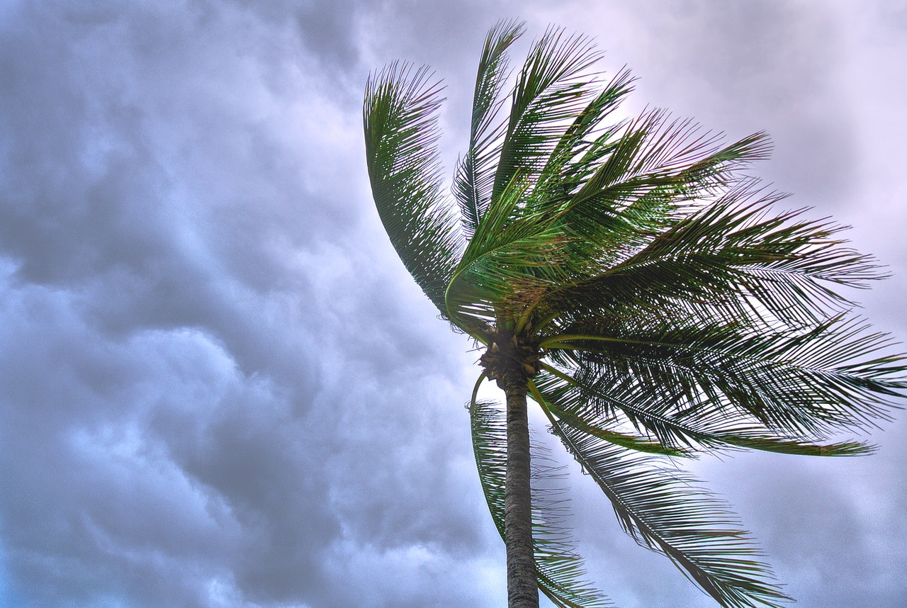 a palm tree being blown by the wind